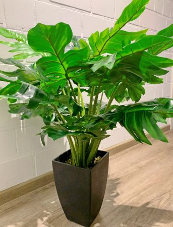 Getopfte Philodendron